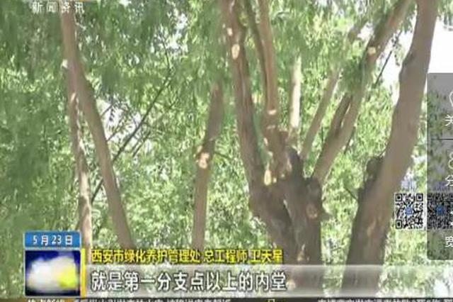 """长安南路行道树被""""剪发"""" 市民吐槽都快剪没了"""
