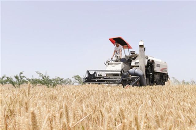 潼关关中第一镰开始收割 全省三夏麦收将陆续展开