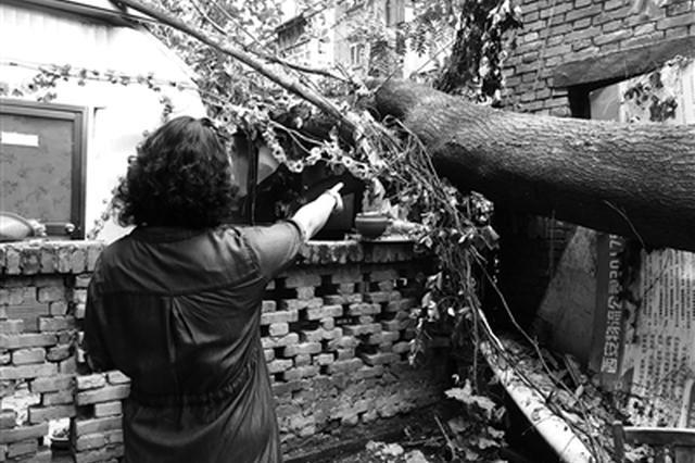 20多米高大树倒?#30053;?#20013;居民房屋 过去多日仍未处理