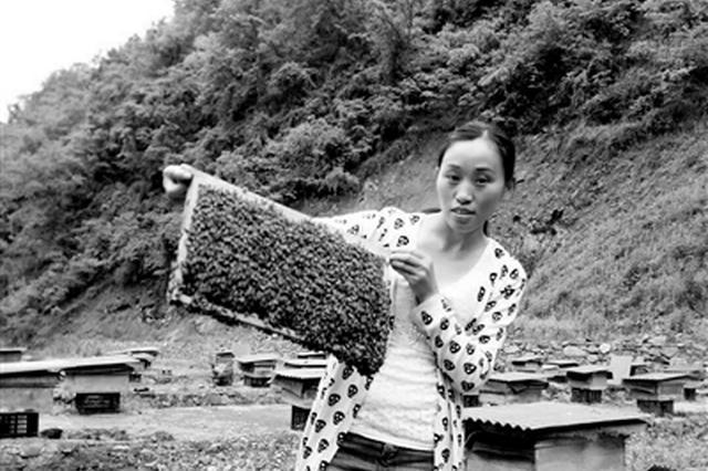 自学养蜂?#38469;?#20174;一箱发展到600箱 女子带贫困户一起脱贫