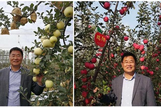 陕西两个苹果新品种通过国审拥有自主产权