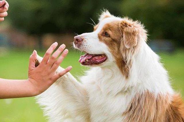 24年前西安就出台限制养犬条例 法规管不住养狗乱象