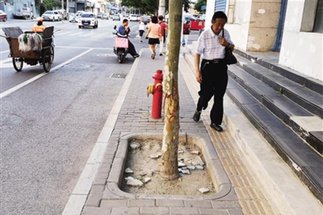 树坑霸占人行道市民难下脚 丰登南路这个坑该填了