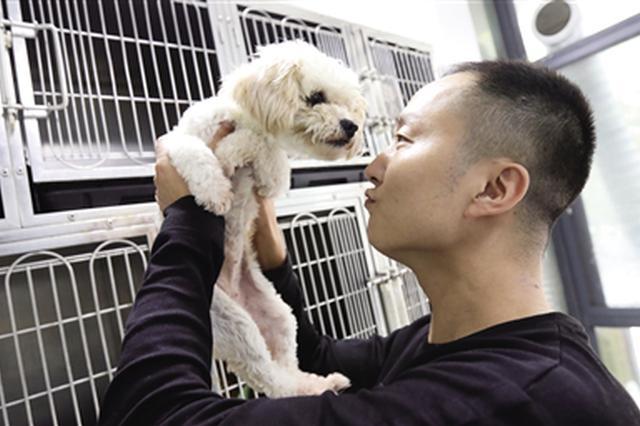 餐饮店老板转行开宠物医院 6年救助近千只流浪猫狗