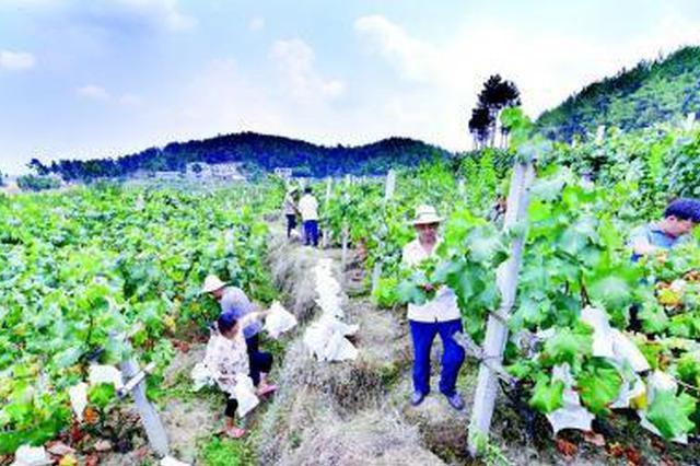 陕西全国一村一品示范村镇达162个 位居全国前列