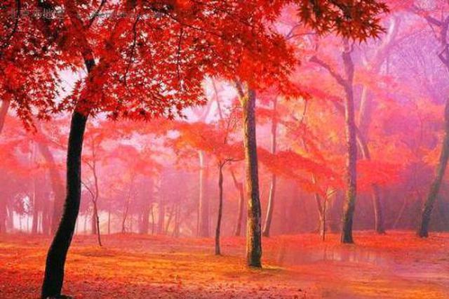 姹紫嫣红层林染周末赏秋正当时 西安这些地方有红叶