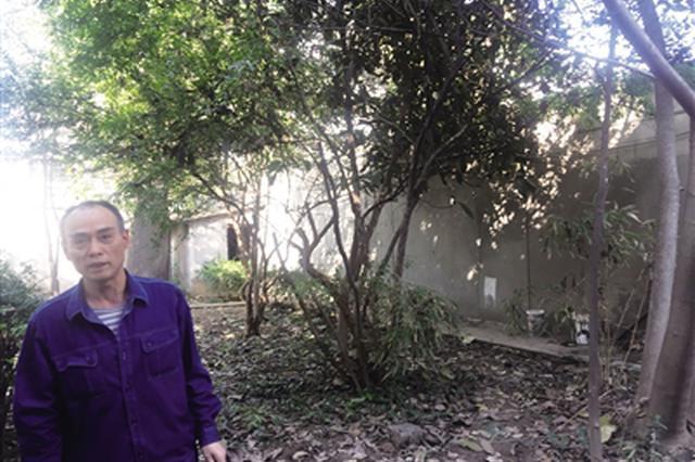 大叔西安种出南方柚子树 今年已挂果20多个
