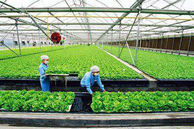 陕西再创建10个省级现代农业产业园 助力乡村振兴