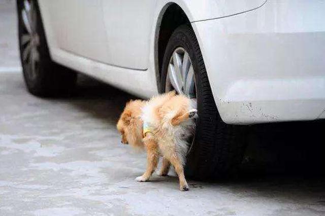 因嫌宠物小狗对车轮撒尿 男子将狗主人打成肋骨骨折