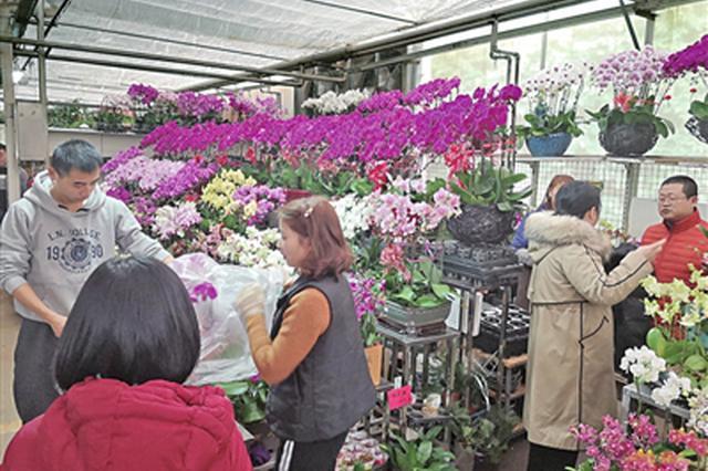 西安花卉市场春意盎然 市民:要过年了图个喜庆