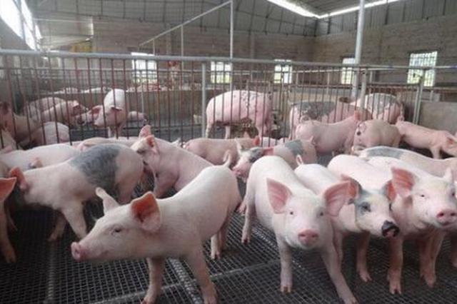 陕西生猪养殖筑底回升 蔬果发展态势良好