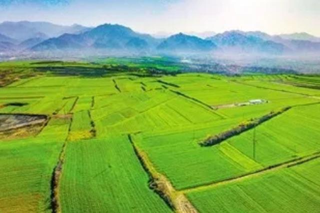 西安市对疫情防控期间蔬菜生产补助1000万元财政专项资金