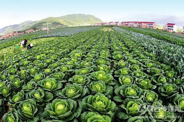 西安拨付1000万元用于蔬菜生产 确保农产品有效供应