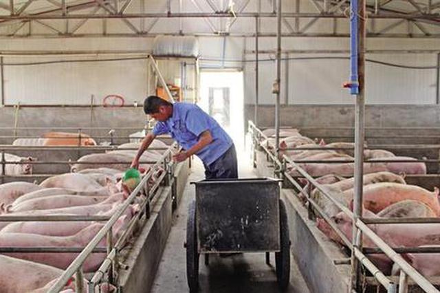 精准施策恢复产能态势向好 陕西积极推动生猪产能恢复