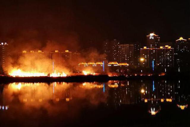 宝鸡渭河滩芦苇荡突发大火 目前火已被扑灭
