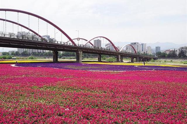十里花海 百里画廊 陕西1500余名河长活跃在渭河两岸