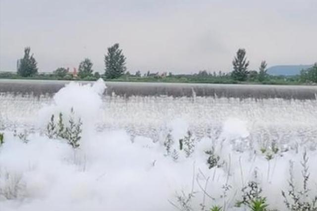宝鸡石头河下游漂浮大量白色泡沫? 原因已查明