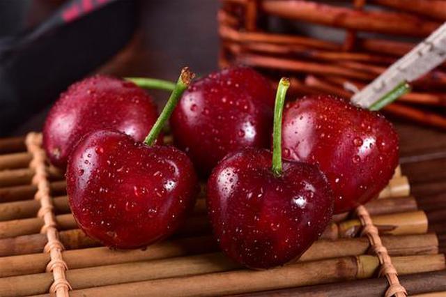 宝鸡小樱桃闯出大市场 亩均收益达到以前的30倍