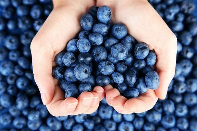 蓝莓成为陕西果业新兴品类 全省种植面积约4000亩