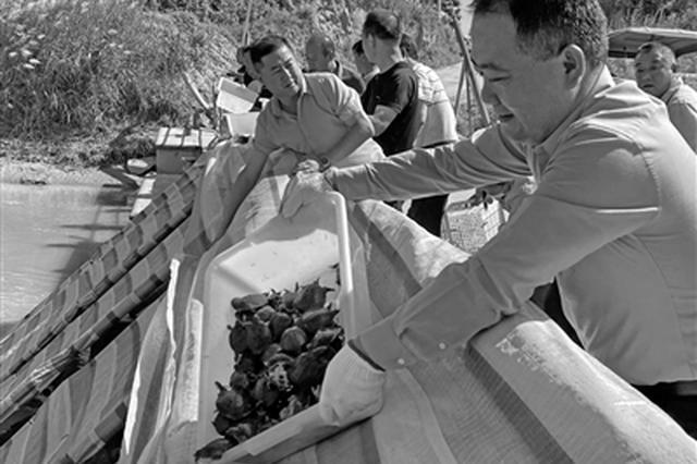 大荔县20万尾鱼苗投入洛河 加快渔业资源恢复