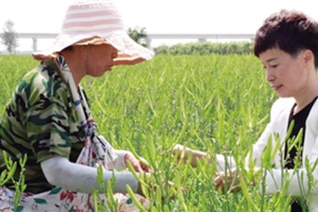 """大荔""""黄花姐""""直播带货助农增收 每天两到三场"""