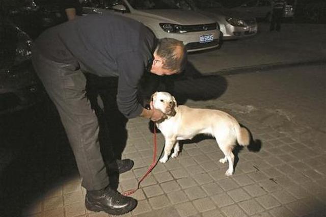业主遛狗不拴绳被罚200元 民警呼吁群众规范养犬