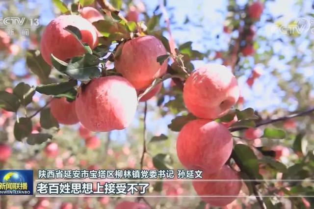 央视新闻联播聚焦陕西延安 小小冷库助力苹果产业发展