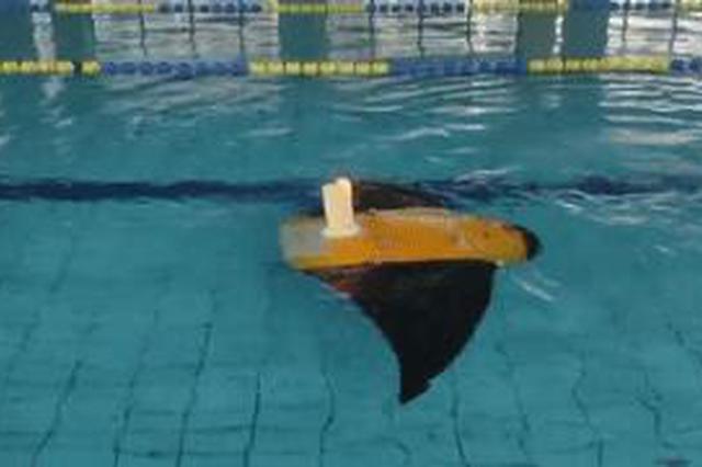 """快来围观!西北工业大学游泳池里来了个大型""""魔鬼鱼"""""""