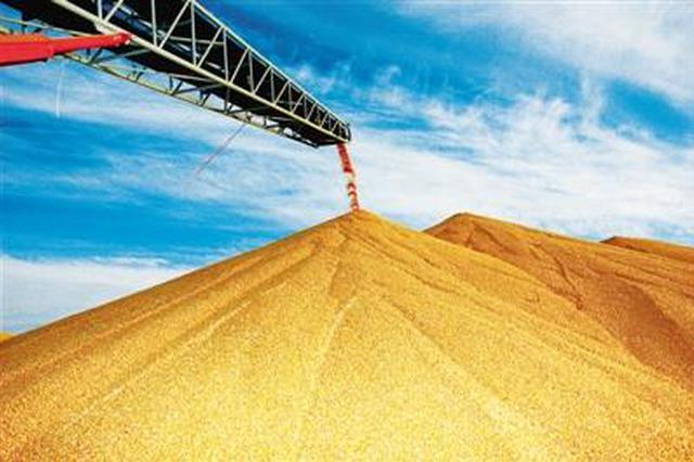 今年陕西粮食产量有望达二十年来最高