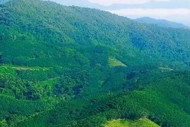 陕西首个国家储备林建设项目开工 将建成420万亩国家储备林