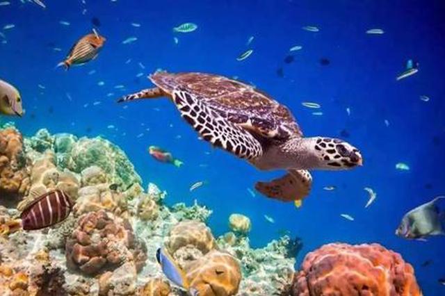 西交大科研人员在印度洋大型动物灭绝等研究上取得新进展