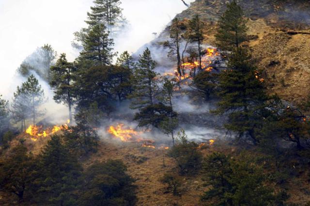 今年以来陕未发生重特大森林火灾 火场过火总面积358.58公顷