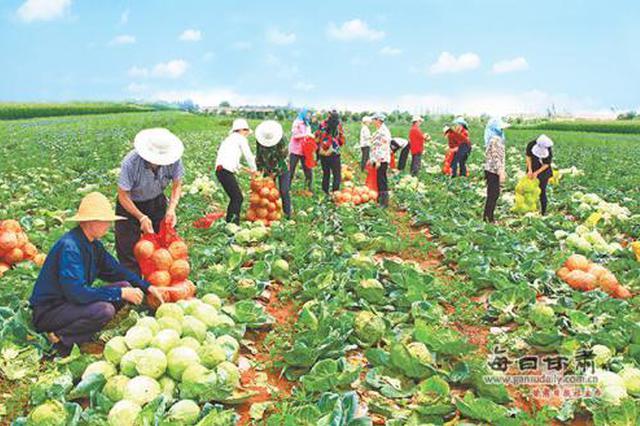白水县构建扶贫产业布局 发展优势产业保障脱贫成果
