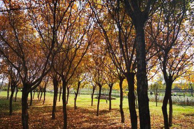 """西安这个区域实施""""落叶缓扫"""" 留住秋天最后的温柔"""