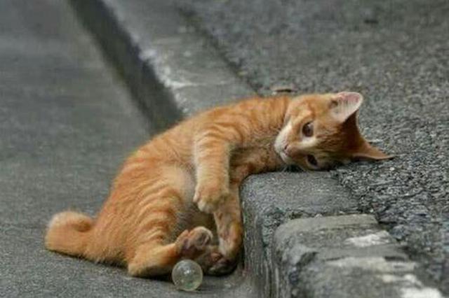 西安一小区流浪猫肚子被剖开,居民称一年内有多只猫死亡