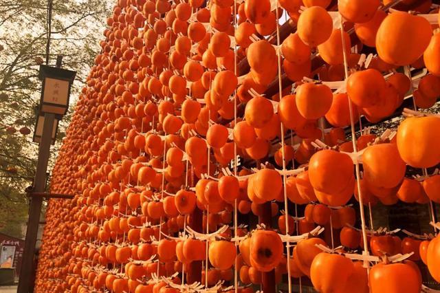火了!西安永兴坊15吨柿子成新网红打卡地!网友:壮观