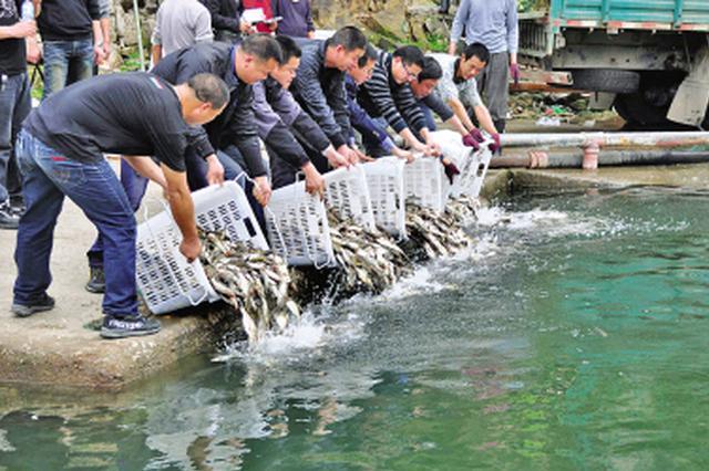 吴起县6万尾鱼苗投放库坝 开展高效半生态养殖