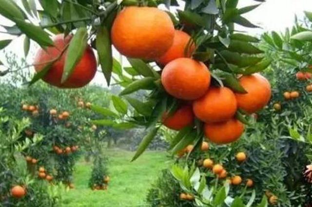 西安市市场监管局印发通知 禁售非法染色食用农产品