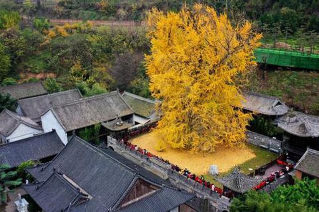 西安古观音禅寺20日起恢复开放 入寺需提前预约