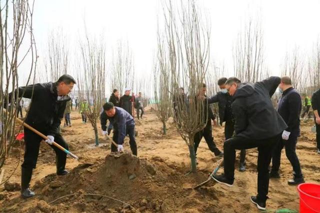 百人携手共植树,扮靓沣渭生态区