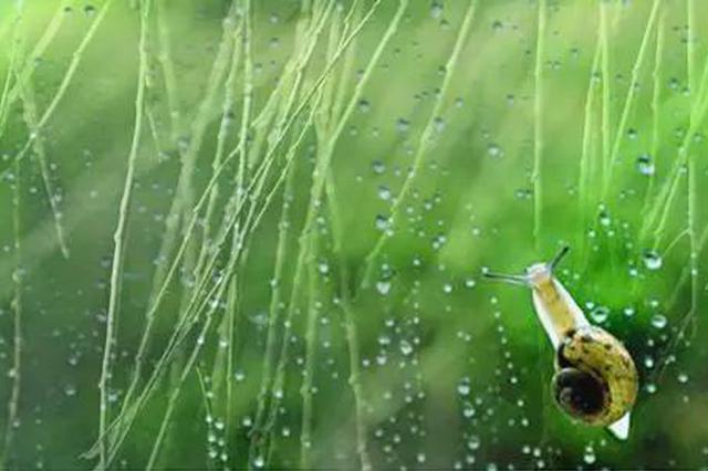 清明未至雨先来假期陕西大部有雨 出行注意安全