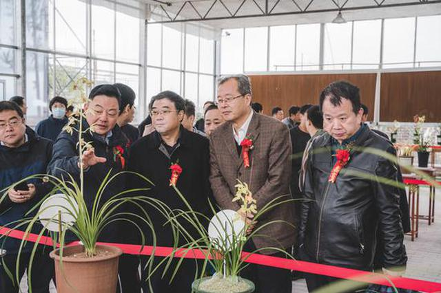 第六届长安兰花节暨首届丝路中国蕙兰大联展今起开幕
