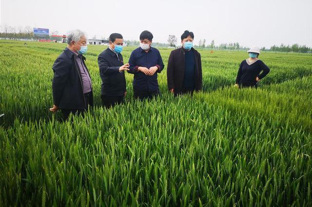我省开展小麦重大病虫防控技术指导