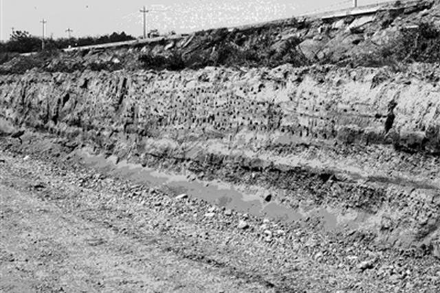 阎良数百崖沙燕施工现场筑洞巢 农林部门:暂停施工