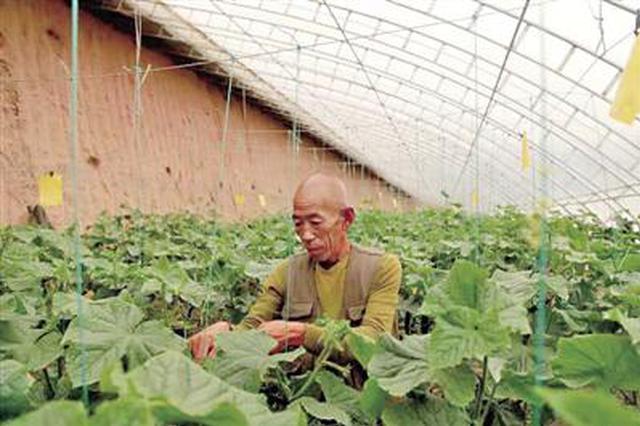 榆林李家河村:蔬菜大棚托起乡村振兴致富梦