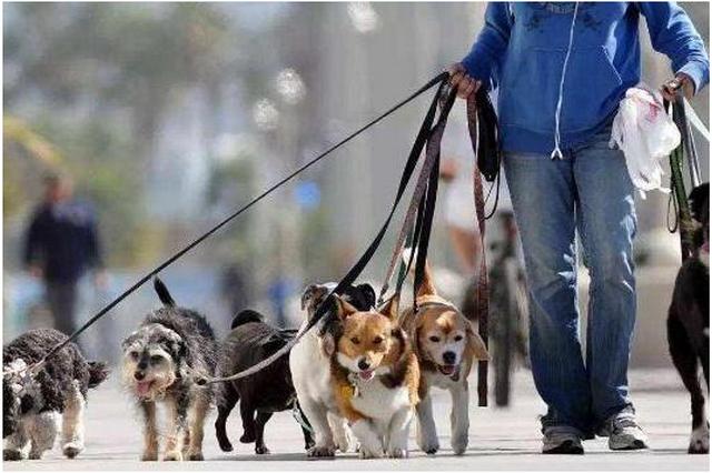 养狗人士必看! 《宝鸡市养犬管理条例》8月1日起施行