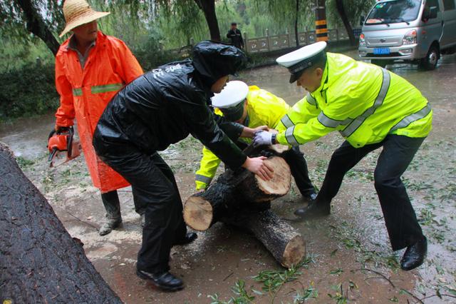 大树倾倒路面 铜川交警二大队民警冒雨快速处置