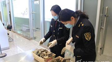 咸阳机场首次截获大量生蚝