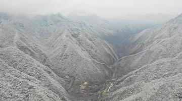 秦岭山中雪景美如水墨画