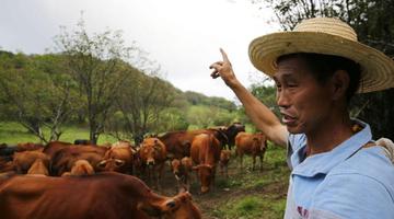 安康镇坪男子养牛卖牛肉年入30万